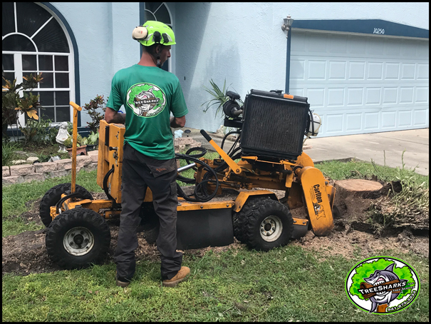 Stump Grinding Port Charlotte FL