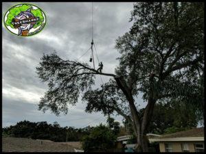 Tree Service Port Charlotte